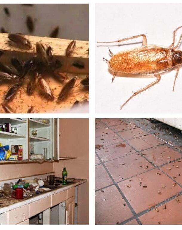 Белые тараканы в квартире — что это?