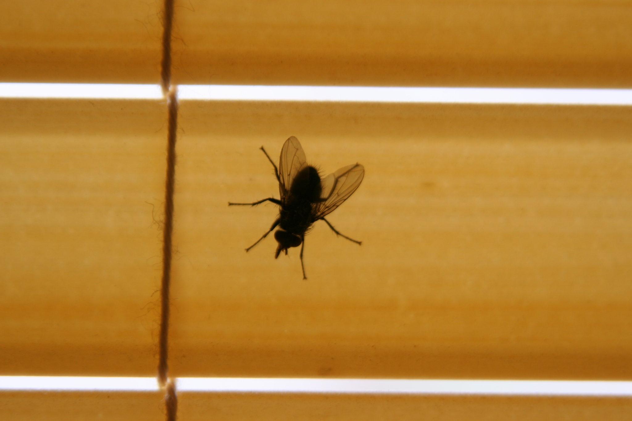 Как избавиться от мух в доме или в квартире? механические, химические и народные средства избавления от мух в квартире - автор екатерина данилова - журнал женское мнение