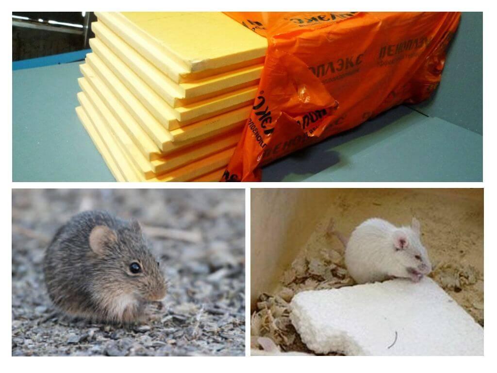 Едят ли мыши пеноплекс - способы защиты материала, фото и отзывы. жми!