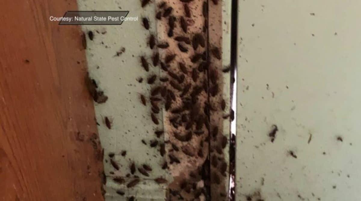 Как вывести тараканов из холодильника?