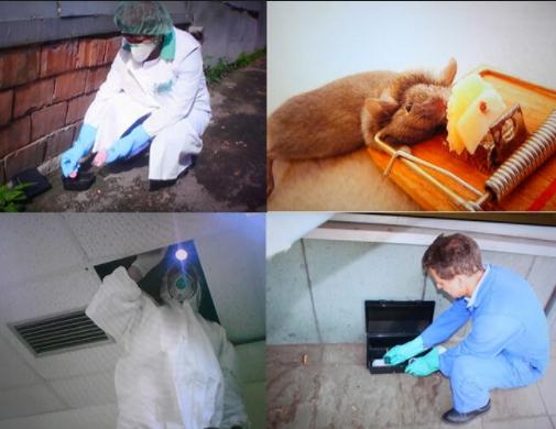 Дератизация крыс. методы эффективной борьбы с крысами