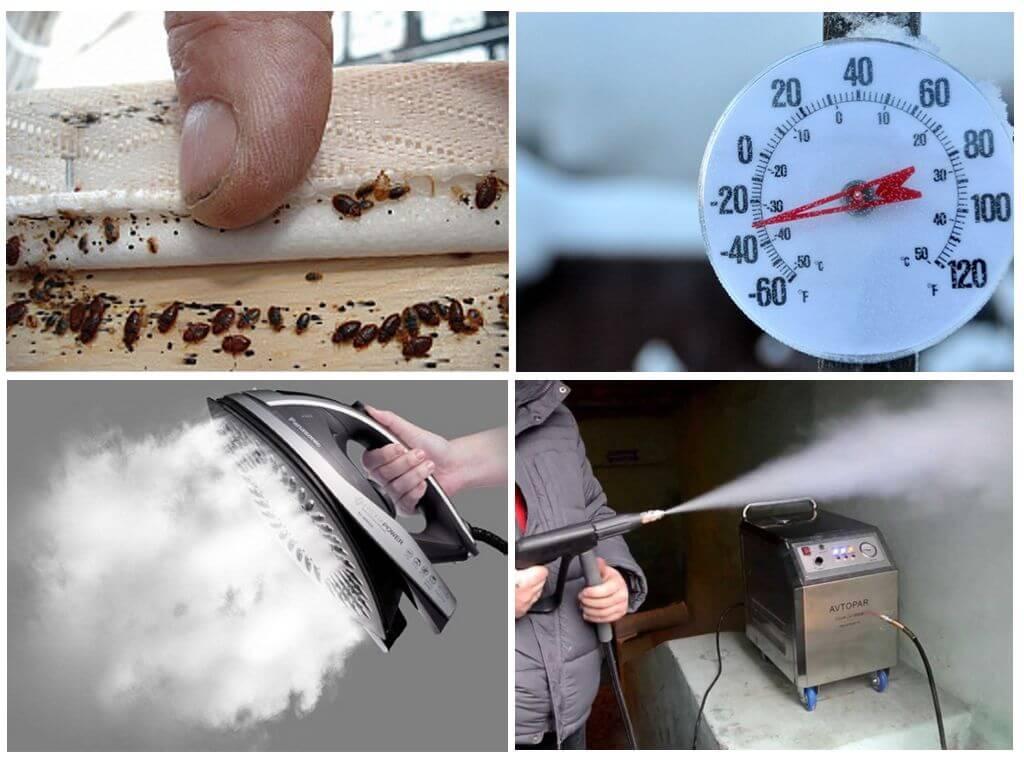 При какой температуре погибают клопы, их личинки и яйца