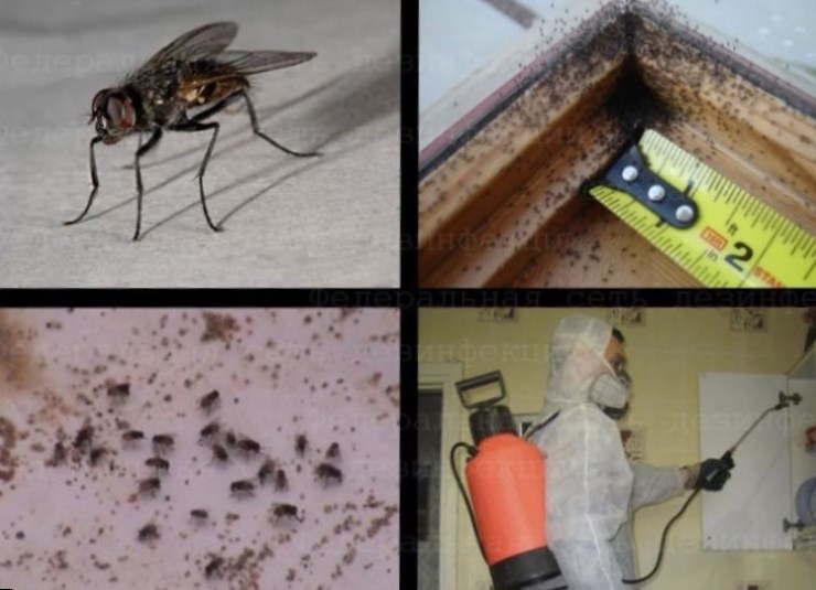 Откуда берутся мухи в закрытом помещении - не секрет