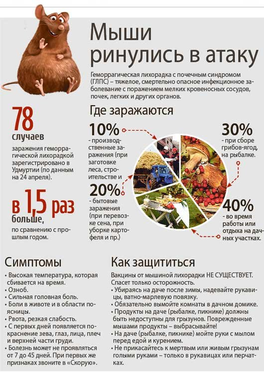 Мышь - виды, чем питаются, сколько живут, где живут, описание