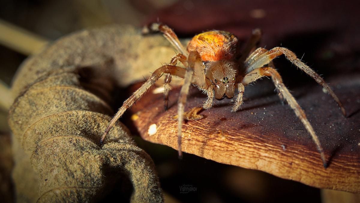 Как зимуют осы: места, спячка, особенности и опасность
