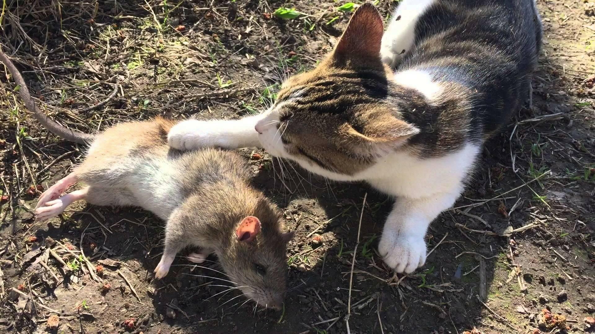 Мыши: милые существа или губители рода человеческого