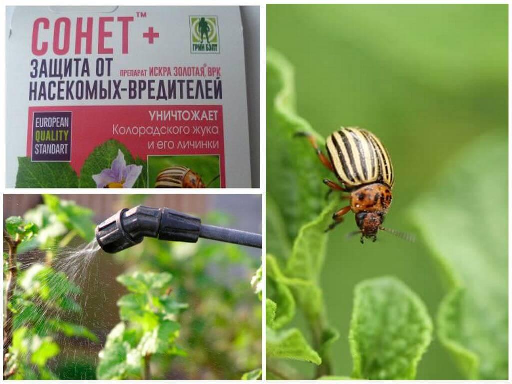 Средство от колорадского жука командор: описание, инструкция по применению