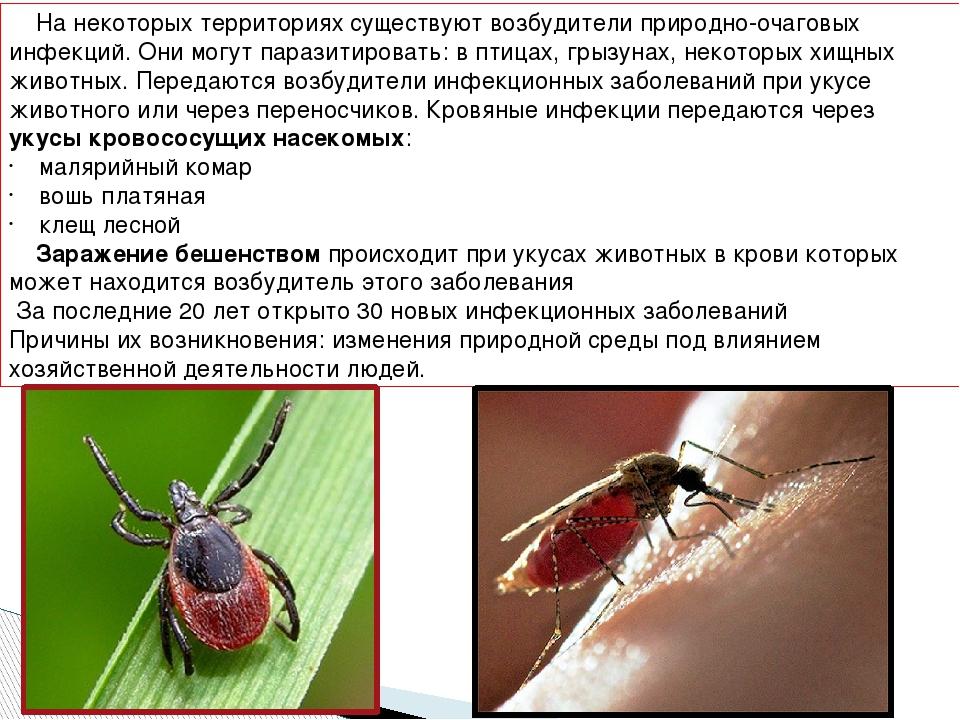 Можно ли заразиться гепатитом через комаров
