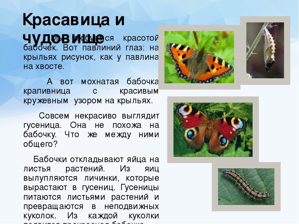 Гусеница павлиний глаз: описание с фото, вред, развитие личинок