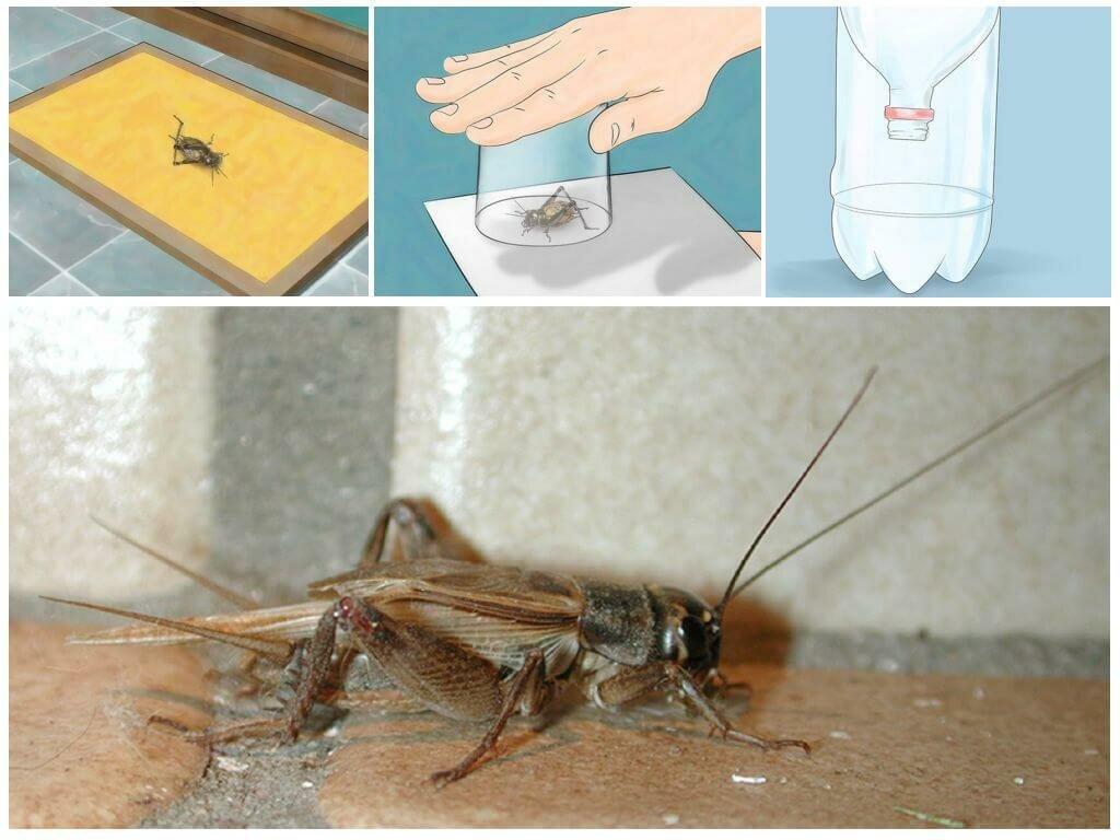 Как избавиться от сверчка в доме и квартире: 16 лучших методов, чтобы вывести насекомое