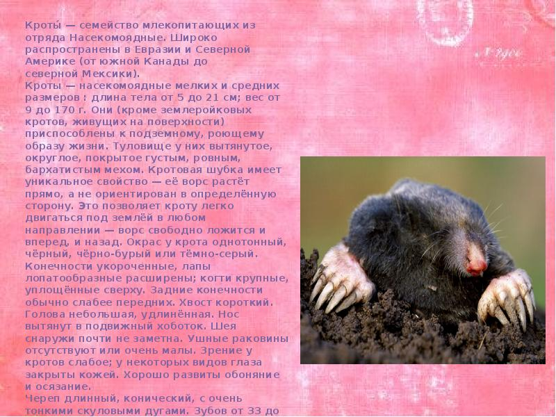 Звездонос крот. описание, особенности, образ жизни и среда обитания звездоноса
