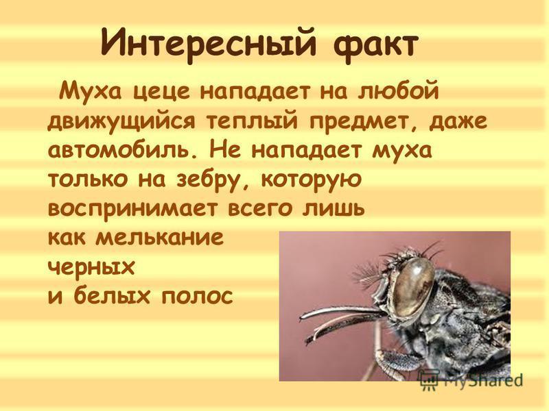 Почему мухи садятся на человека: причины назойливости насекомых