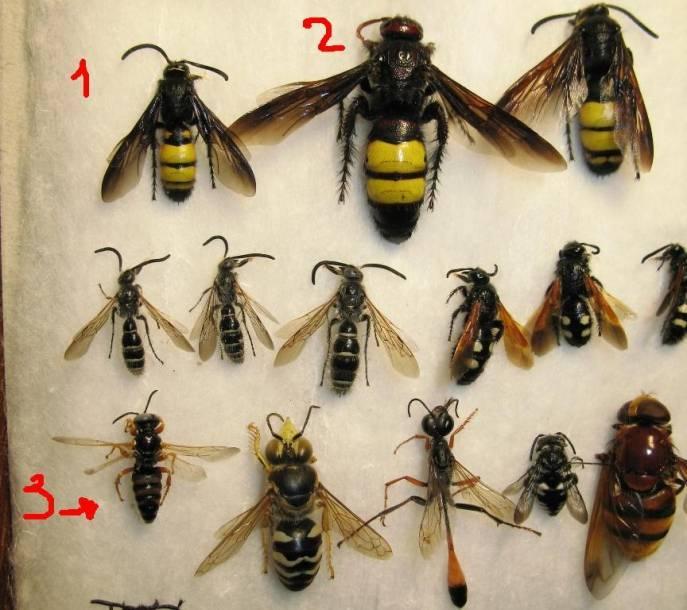 Кто такие насекомые и что они собой представляют