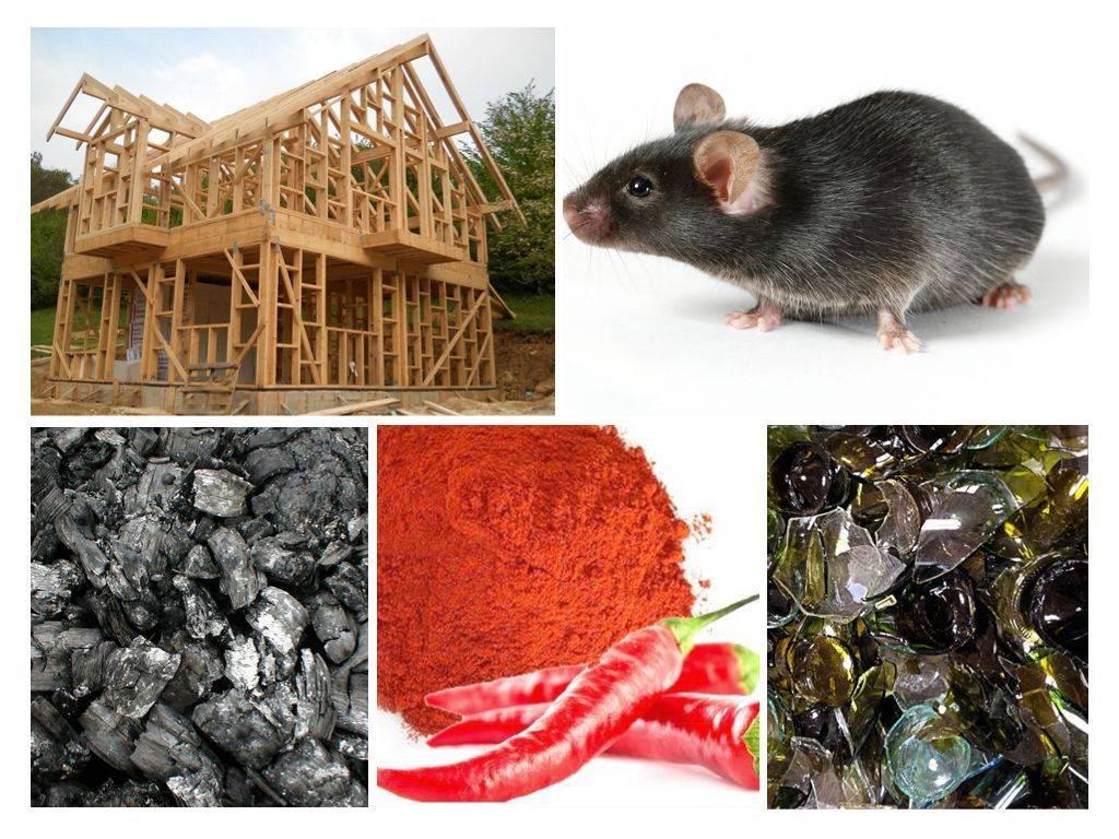 Мыши в стенах: как избавиться от вредителей 2021