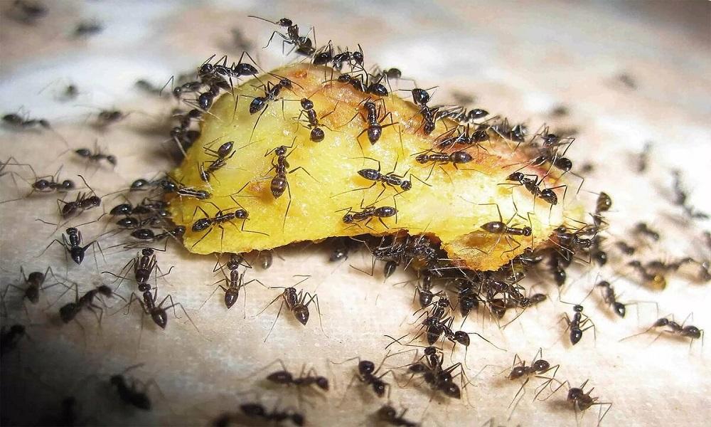 Как избавиться от муравьев на пасеке: методы борьбы и профилактики