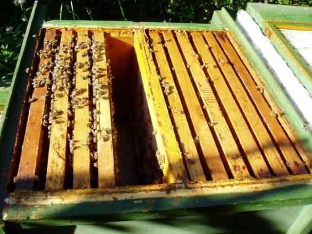 Как избавиться от муравьев в улье: инструкция