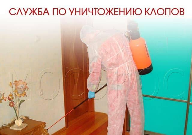 Топ-10 лучших народных средств, помогающих избавиться от клопов в вашей квартире