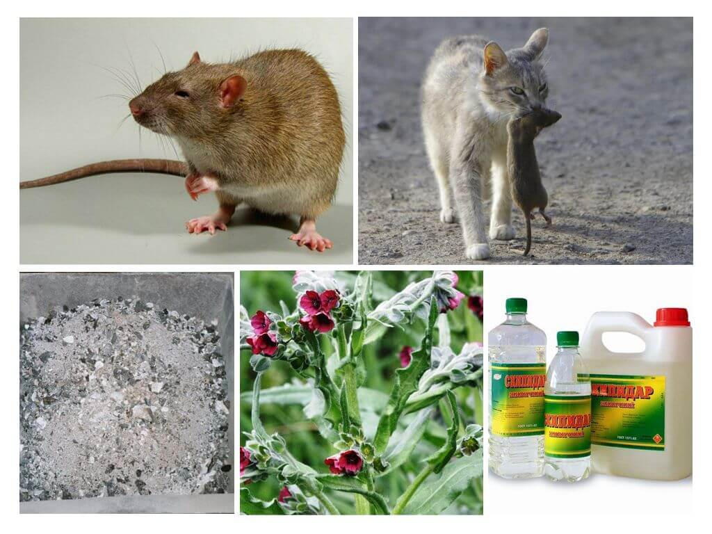 Чего боятся мыши - народные средства