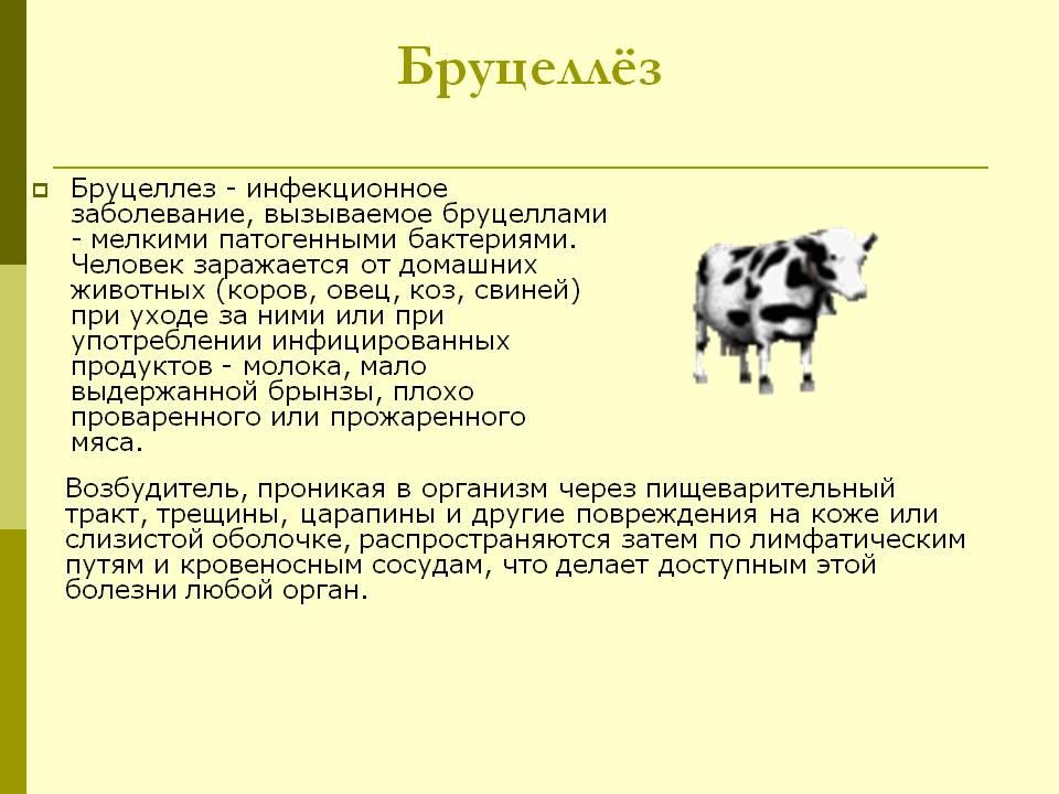 Можно ли пить молоко, если козу укусил клещ