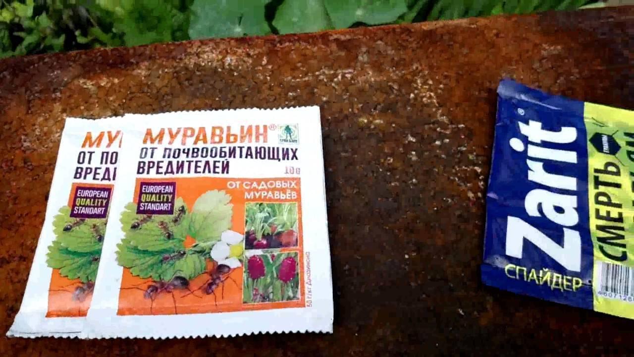 Муравьи в теплице с помидорами как избавиться и вывести навсегда, видео и фото