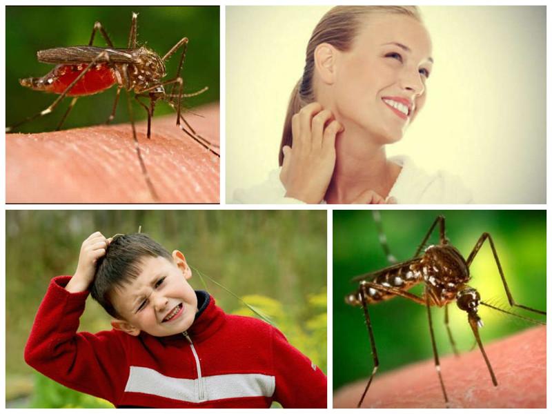 Виды комаров. как эффективно обработать укус? чем опасны комариные укусы?