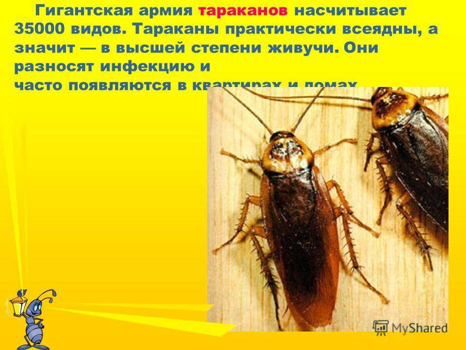 Какой вред наносят тараканы здоровью человека