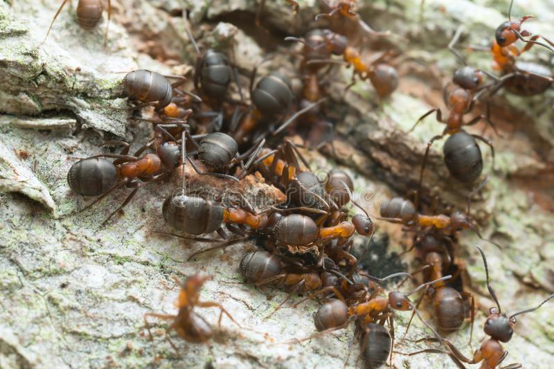 Как избавиться от муравьев в частном доме самостоятельно?