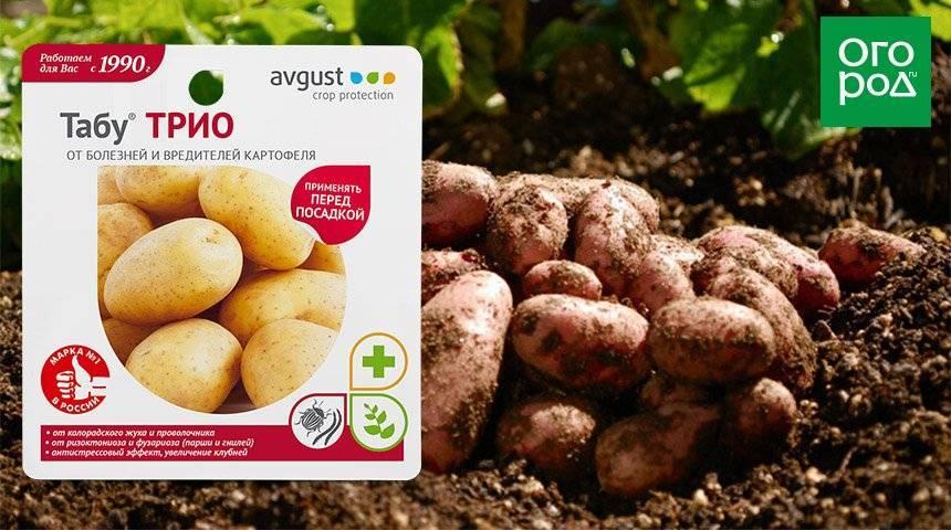 Инструкция по применению средства табу от колорадского жука для картофеля