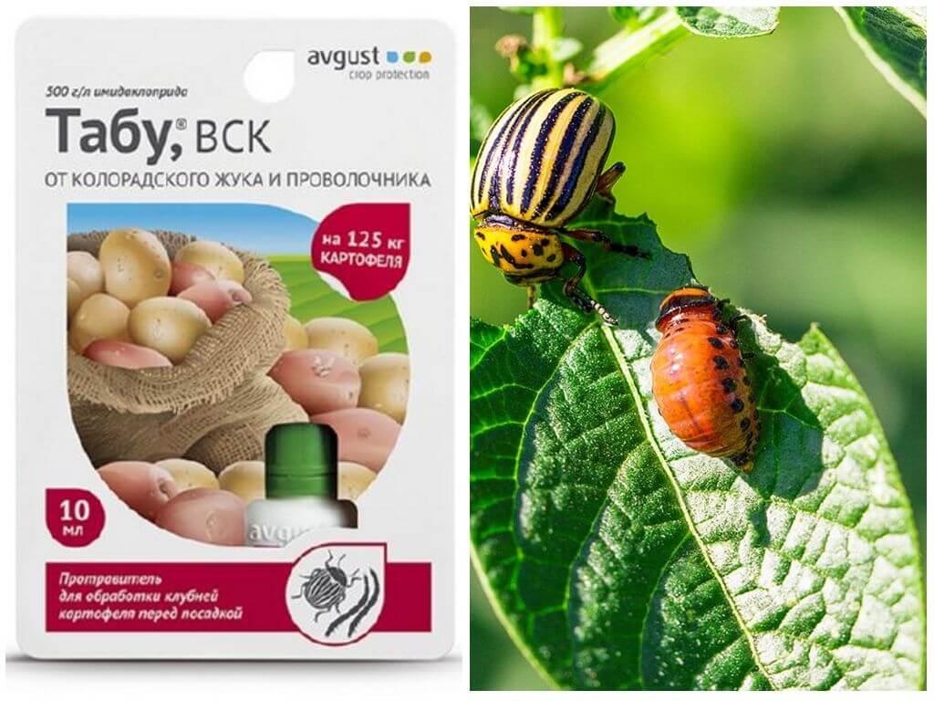 Применение препарата «престиж» от колорадского жука и других вредителей