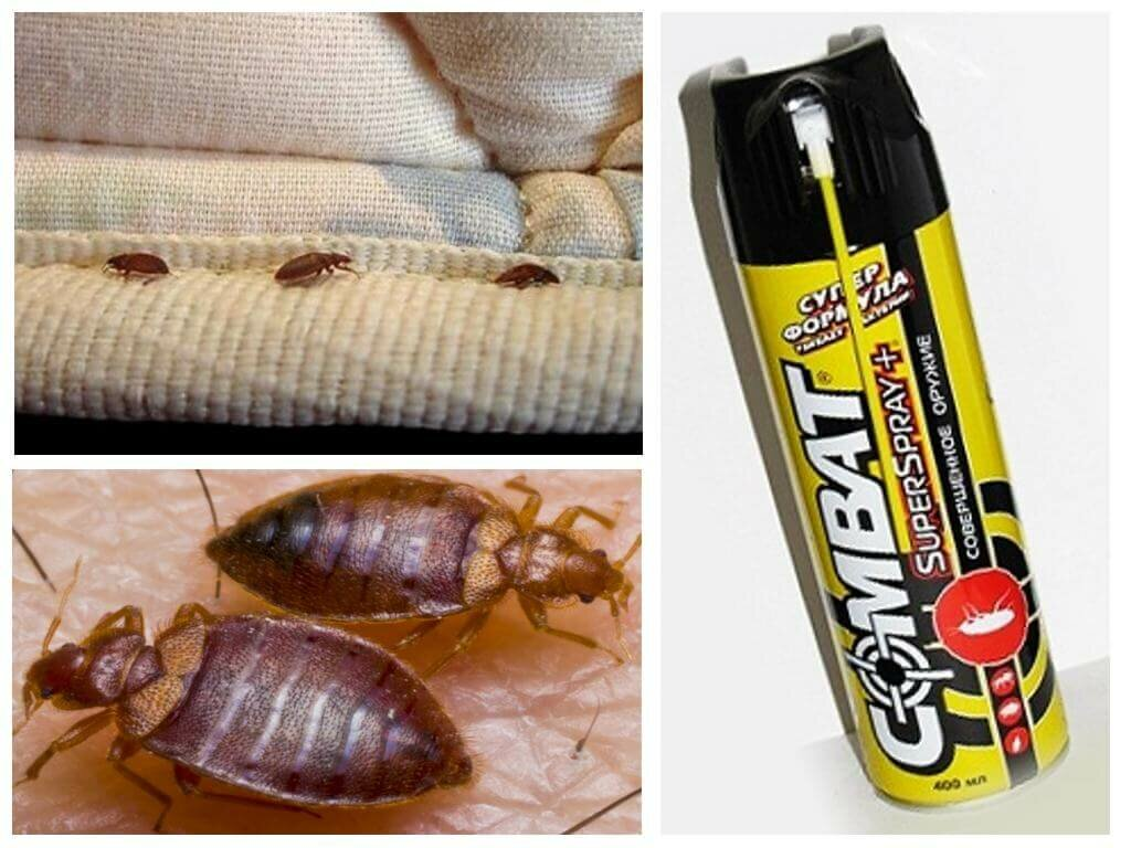 Средство от тараканов get: состав, действие и способ применения