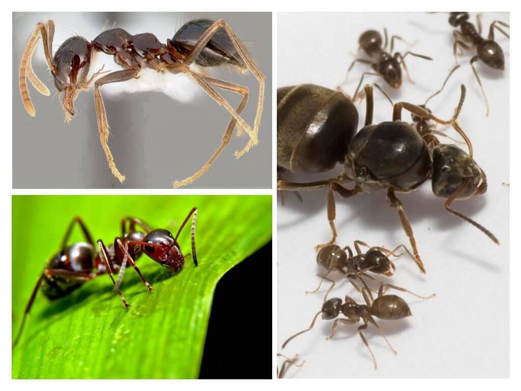 Как муравьи готовятся к зиме?   дачная жизнь