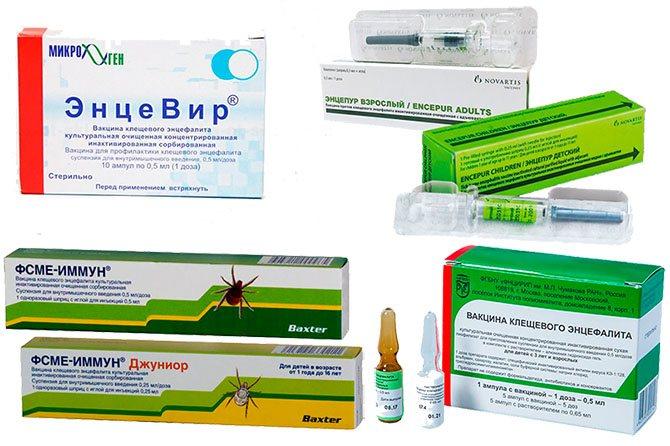 Стоит ли ставить прививку от клещевого энцефалита?   плюсы и минусы