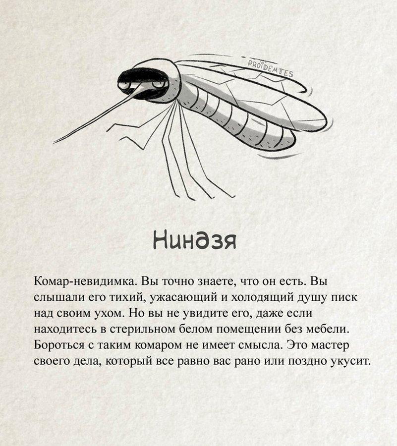 Сезон открыт: как борются с комарами в разных странах