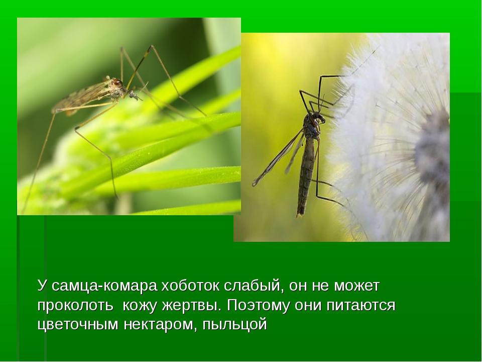 Какие люди больше всего привлекают комаров? причины, фото и видео