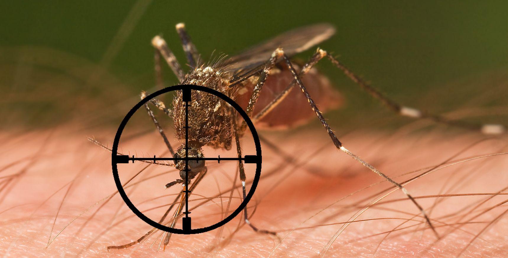 В каких странах и городах нет комаров - сорнякам нет
