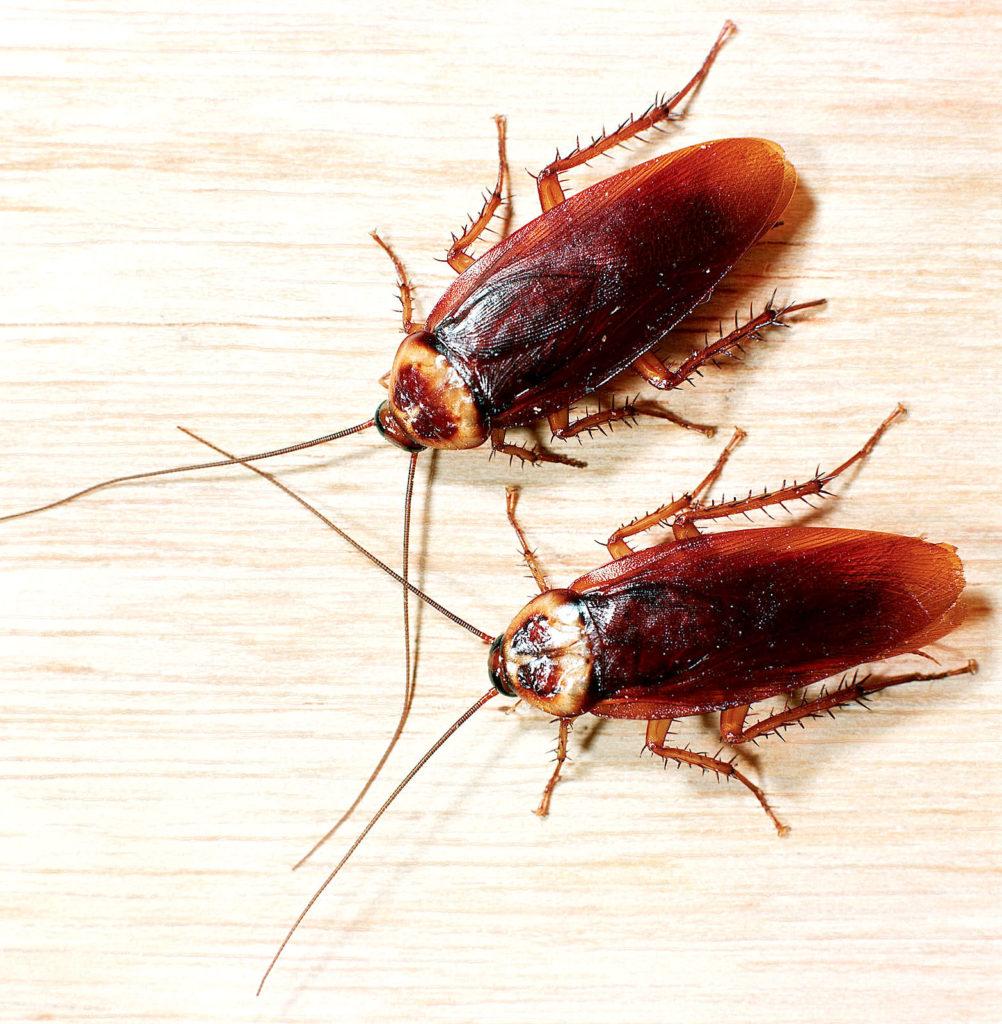 Сонник много тараканов убиваю их. к чему снится много тараканов убиваю их видеть во сне - сонник дома солнца