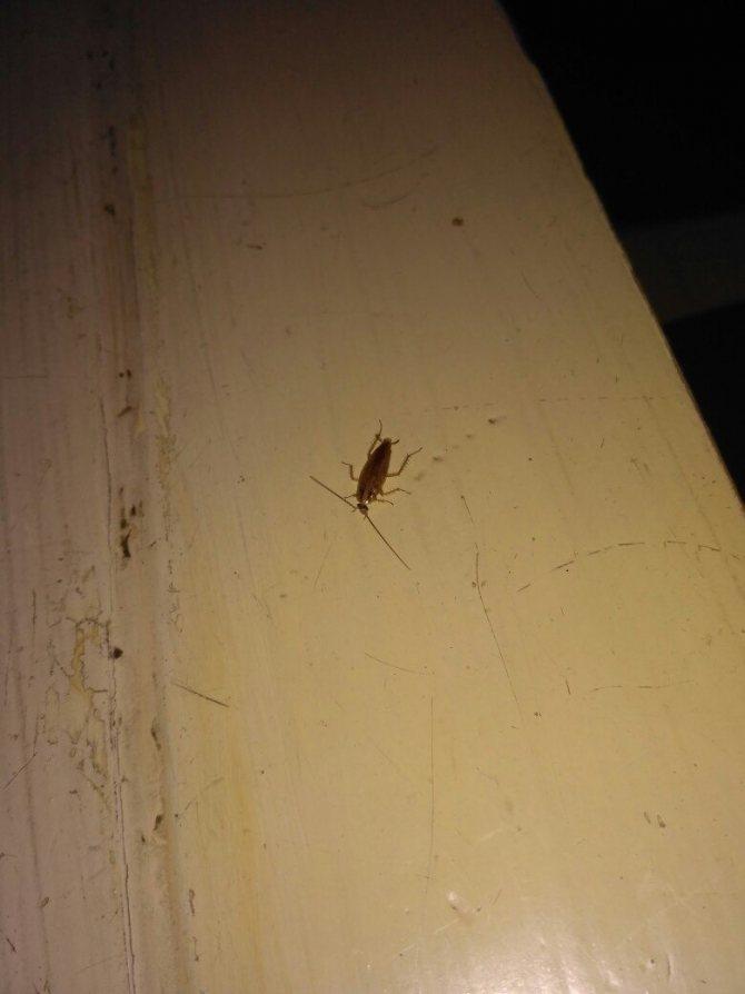 Как избавиться от тараканов в общежитии раз и навсегда