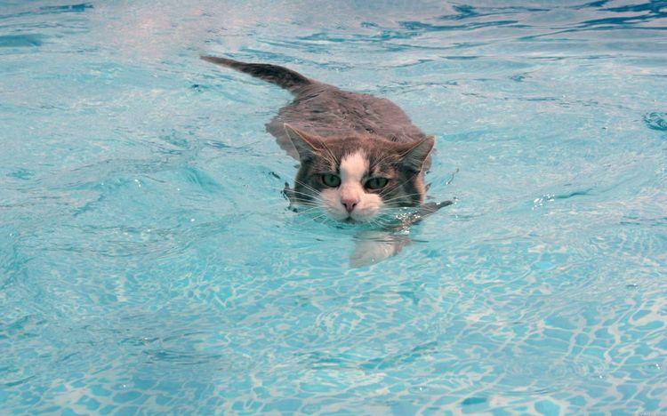Как плавать под водой: техники и правила - morevdome.com