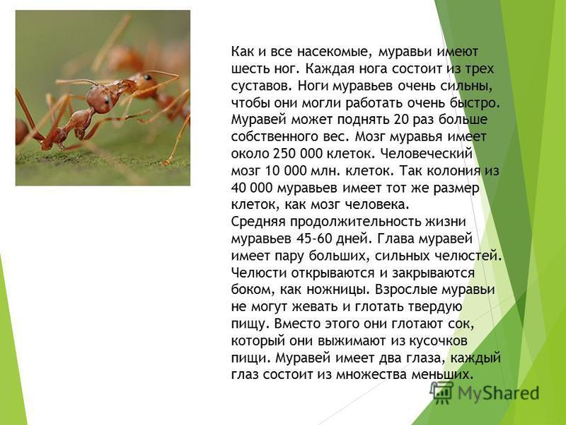 Конечности как идентификационный признак или сколько ног у муравья