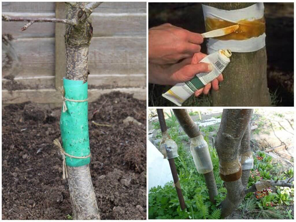 Муравьи на деревьях как избавиться народными средствами и химикатами