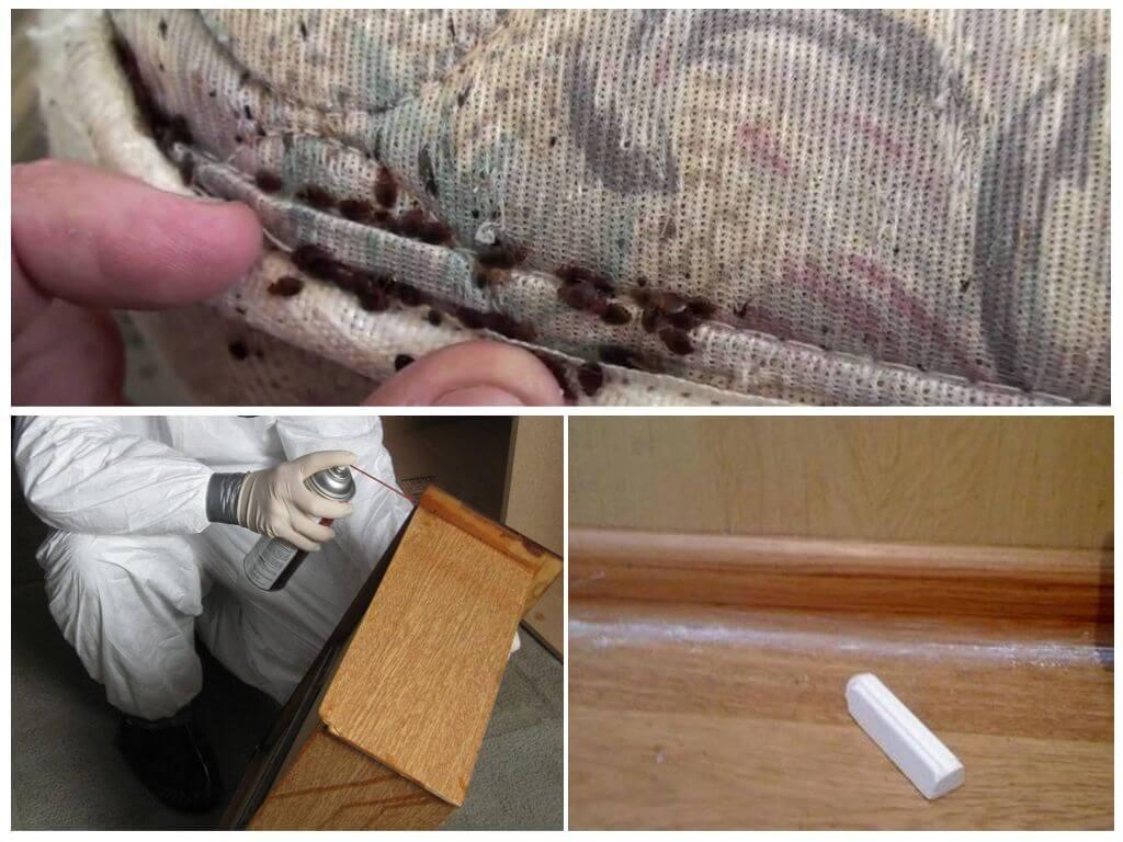 Как самостоятельно избавиться от клопов в квартире в домашних условиях