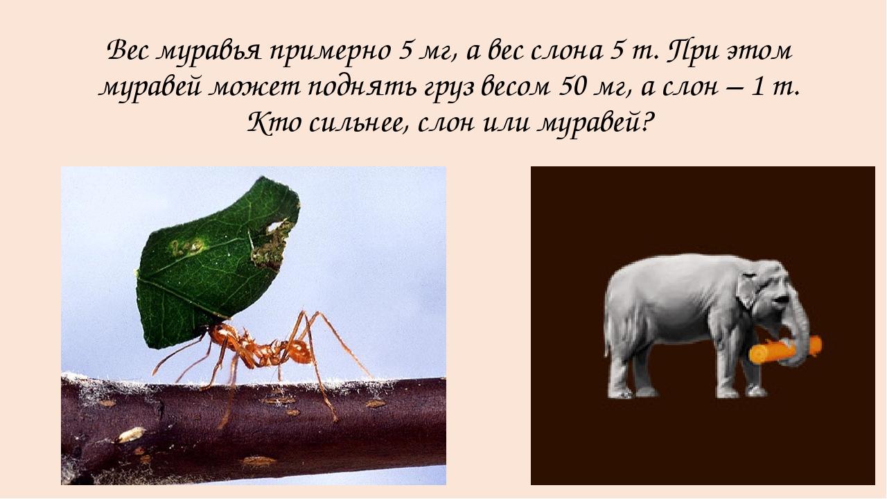 Сколько весит муравей