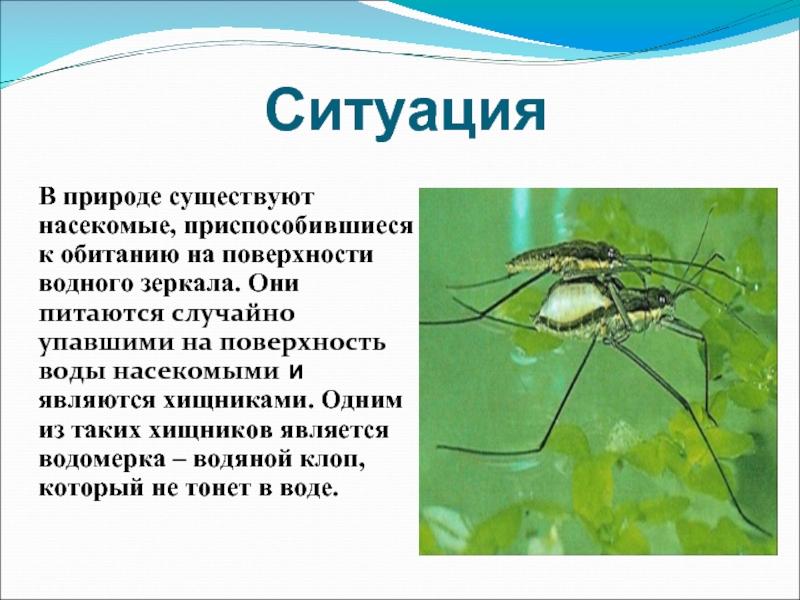 Фото клопов разных видов: какие бывают, где обитают, особенности питания, какой вред наносят человеку русский фермер
