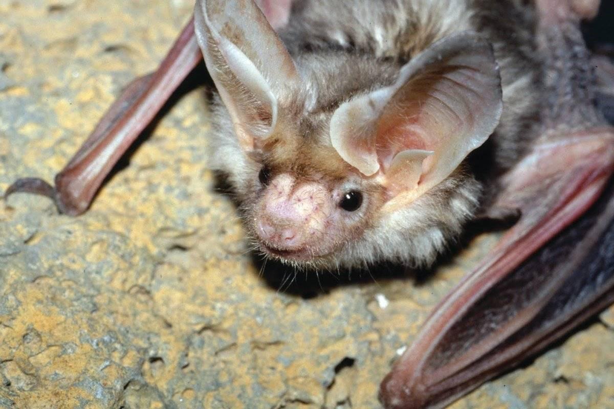 Отпугиватель летучих мышей: как выгнать ультразвуком, эффективна ли мазь