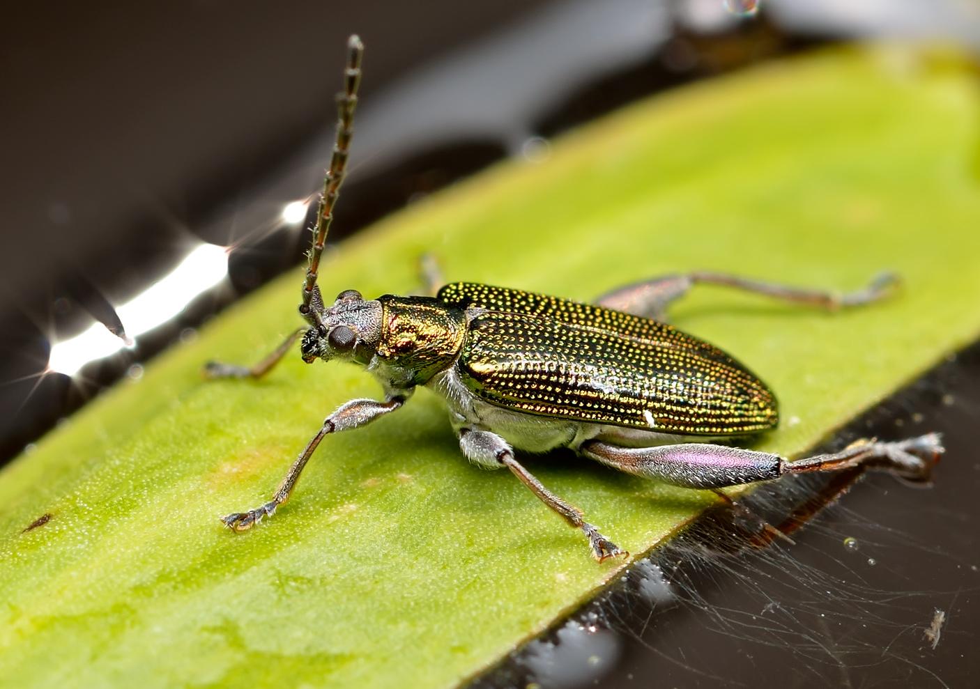 Плавунец широчайший: хищные жуки - индикаторы чистой воды