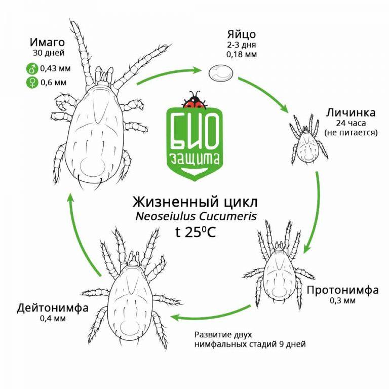 ❶ 21 вид клещей в природе: паразиты на человеке и животных