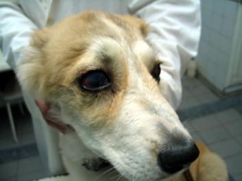 Основные инфекционные заболевания у собак: список самых распространенных инфекций (симптомы, диагностика, лечение)