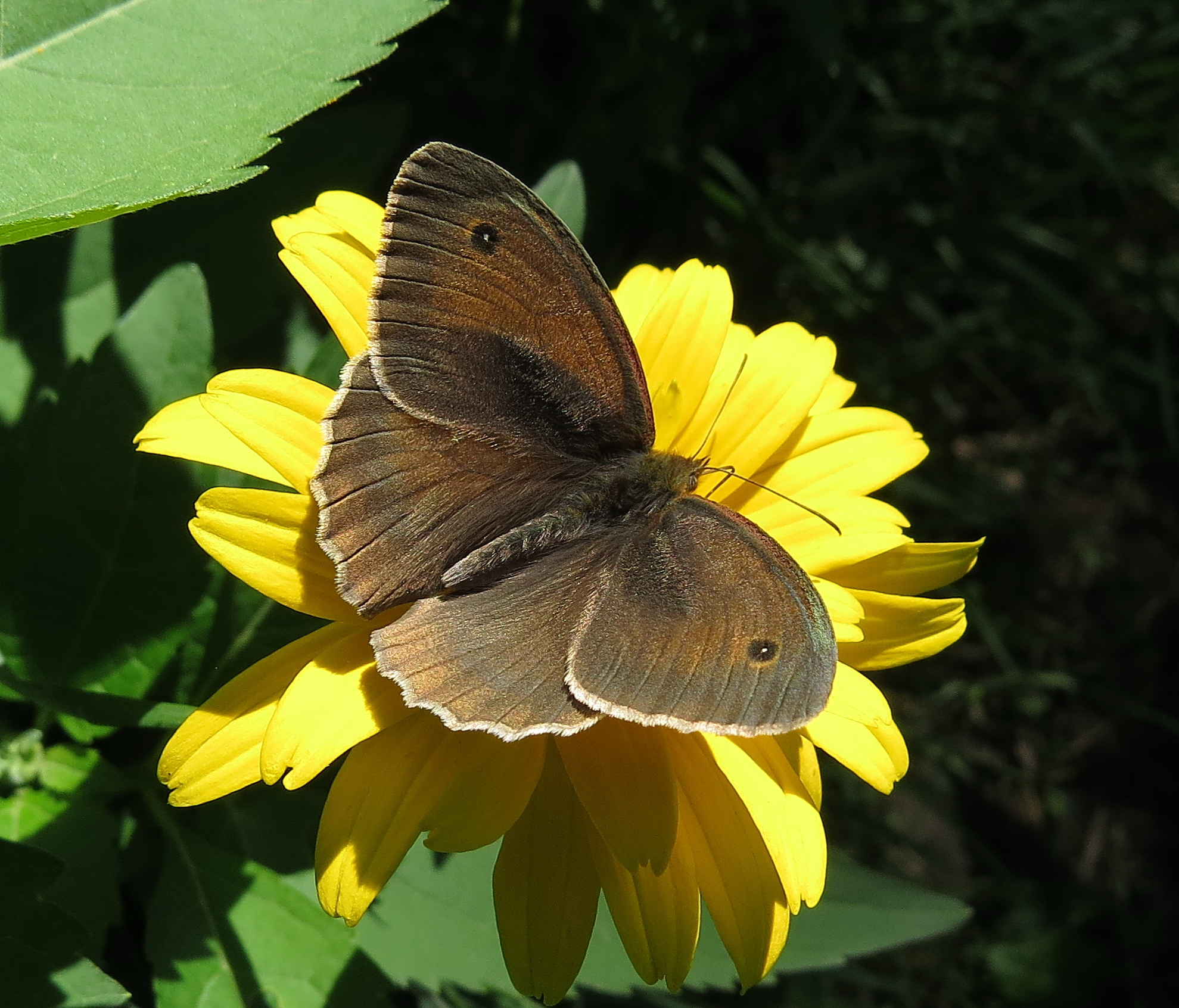 Бабочки (выпуск 7)