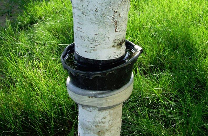 Ловчие пояса от вредителей на деревьях. описание, виды, использование. как сделать своими руками? фото — ботаничка.ru