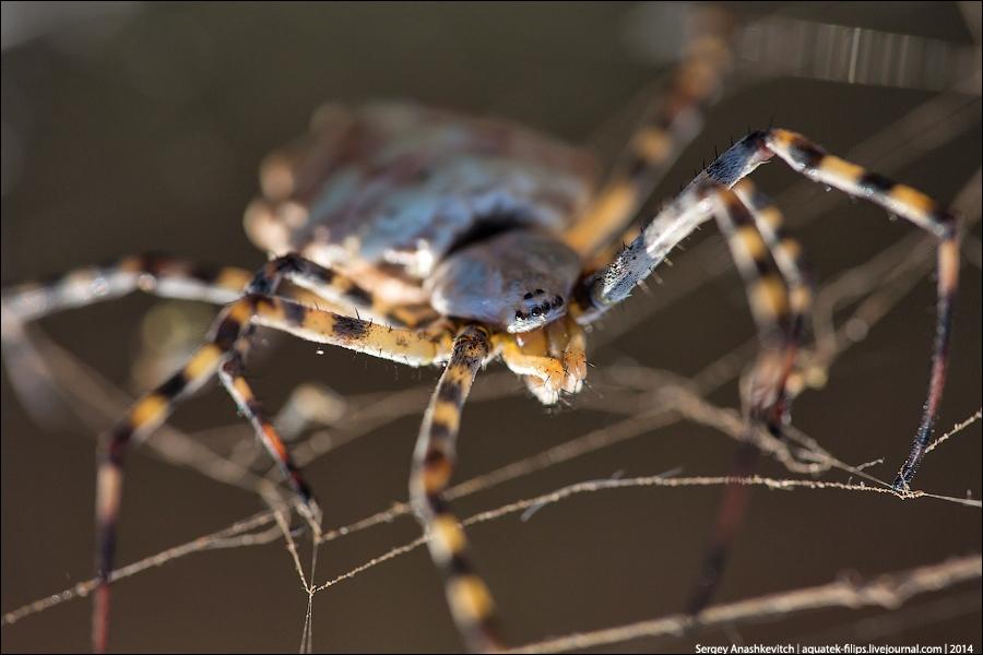 10 самых ядовитых пауков россии - каракурт и другие опасные виды 10 самых ядовитых пауков россии - каракурт и другие опасные виды